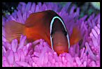 Visit the Fiji Picture Gallery