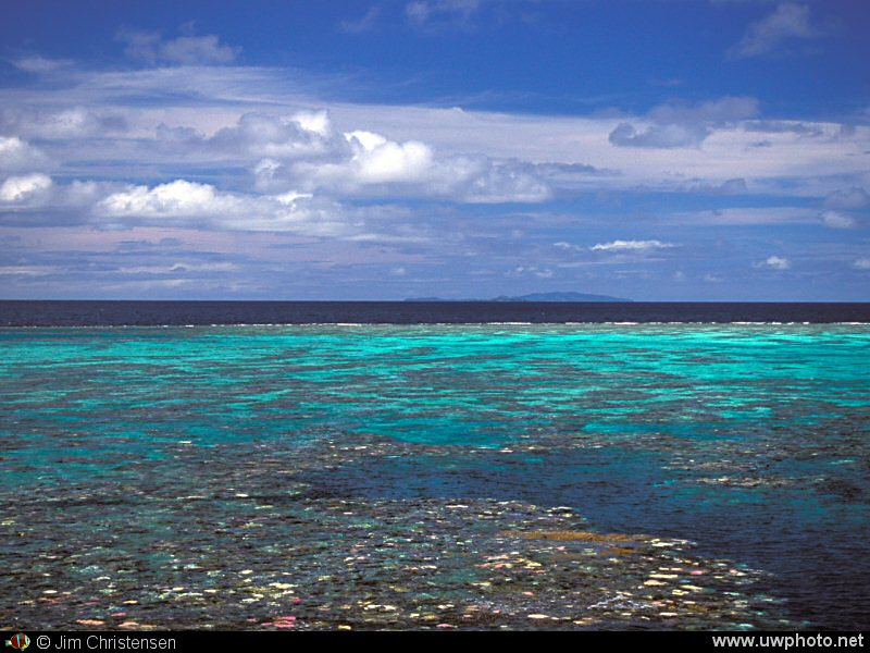 Tropical Reef: At low tide, the top of the reef is exposed.
