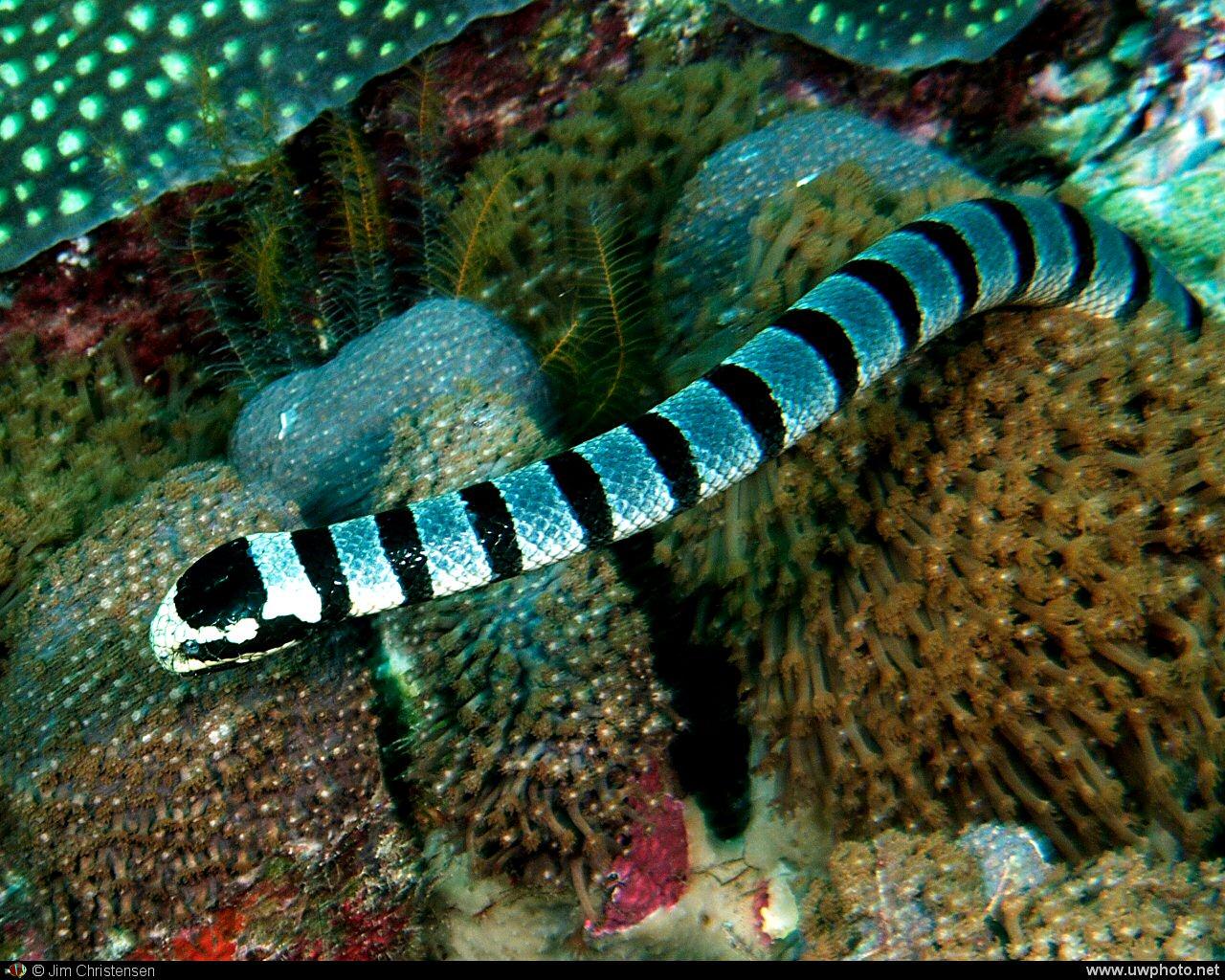 Giant underwater snake - photo#9