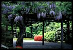Gate of Wisteria