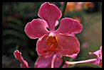 Visit the Orchids Photo Gallery