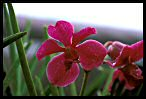 Visit the Orchids Image Gallery